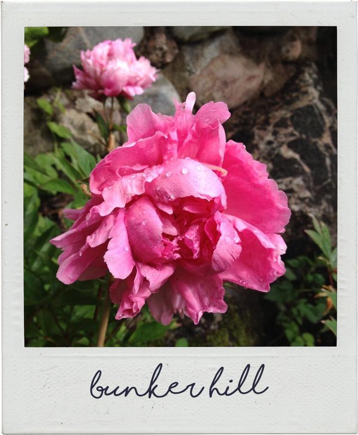 Bunker Hill   www.stillme.fi